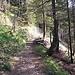 Waldpfad. Darf aber nicht täuschen. Nicht immer ist der Bergweg so gut ausgebaut.
