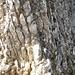 Die Schlüsselstelle beim Hoh Brisen Grat - hier vom Hoh Brisen aus fotografiert