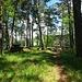 Picknickplatz oberhalb der Gorges du Pichoux .- P911.9