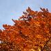 der Herbst leuchtet in seinen schönsten Farben