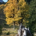 schöne Herbstbäume beim Aufstieg zum Geiselsteinjoch