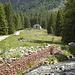 Superato i due ponticelli sul torrente Arnasca, si intravede la meta del giro di oggi. Qui comincia l' Alpe Coeder.