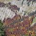 tolle Herbstfarben im Nagelfluhhang des Hochgrates