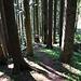 Abstieg auf Waldpfaden