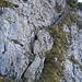 """über diese Querrinne in der senkrechten Beslerwand führt der kleine, ausgesetzte """"Klettersteig"""" hinauf - sicher die spannendste Route zum Besler"""