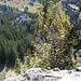Tiefblick vom Besler in das schöne Lochbachtal