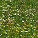 Am Stigwasser vor Mund. Blumenpracht in der Heuwiese.