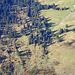 Vogelschau auf den lichten Tannenwald und die Alp Malun