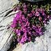 Erste Frühlingszeichen auf dem Mont Fourchon