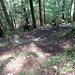 schön durch den Wald