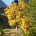 Herbstliche Pracht beim Zustieg