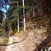 Hübscher Waldweg. Minuten später stellte sich heraus, dass ich am irrlaufen war. Bei warmem Herbstwetter und so einem Wald (der herrlich duftete) sind ein paar Kilometer Umweg überhaupt kein Ärgernis.