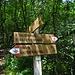 Schilder im Wald...oder Schilderwald?