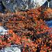 Végétation automnale - rhododendrons
