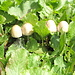 Vegetazione e funghi tipici di un terreno grasso