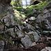 Steiler Aufstieg im Wald