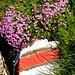 Blume + Wegzeichen