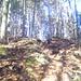 Der Steig zur Ziegelspitz führt durch den Wald, ...