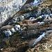 Felsblöcke lösten sich vor einiger Zeit vom Rücken des Zuestoll.
