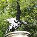 [http://www.hikr.org/gallery/photo806455.html?post_id=51194#1 ...e dopo attenta analisi] il rapace cattura la lucertola ma resta impigliato in una ragnatela