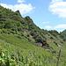Oberhalb von Laach geht es über die Weinfelder zum Ümerich hinauf...