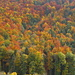Herbstfarben im Baselbiet