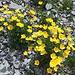 Blumen in der Schutthalde.
