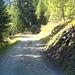 Rückweg ab Steibechriz (unterer Teil)