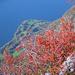 Herbstfarben über dem Walensee