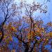 Herbst III