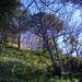 Steiles Gras am nördlichen Sporn