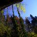 Vertikal strukturierter Herbst unter den Flühen des Oberlandes