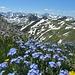 Der Saalfelder Höhenweg zur Schochenspitze
