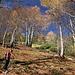 Aufstieg im herbstlichen Wald