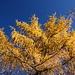 wunderschöne Herbstfarben