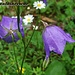 Mutter Natur zeigt sich von ihrer schönsten Seite, was die Blumen zumindest angeht