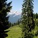und immer wieder die Alpspitze über den offenen Flächen