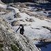 Eine Tschechische Bergsteigerin im unteren Teil des einfachen aber teilweise luftigen Klettersteiges zum Mali Triglav.