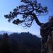 Die Kalkzähne des Chli Schijens erheben sich aus dem Wald