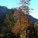 Descente du Mont de la Coche sur Précherel (Savoie)