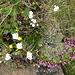 hübsches Alpenblumen-Arrangement