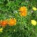 """weitere Blumen-""""Parade"""" 1"""