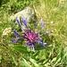 Altro bellissimo fiore, di cui però ignoro il nome