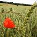 Landwirtschaft in schöner Aufmachung