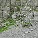 Steinböcke am Ende des Valslochs