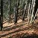 Herbstliche Stimmung im Wald
