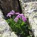 Erstaunlich, wo Blumen überall wachsen...