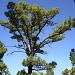 Der herrliche Duft der Kieferwälder und die Ruhe sorgen für Erholung auf La Palma