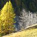 L'hiver est déjà arrivé pour certains arbres ; d'autres sont encore en automne
