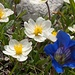 Blütenpracht im üppigen Sittersbachtal.